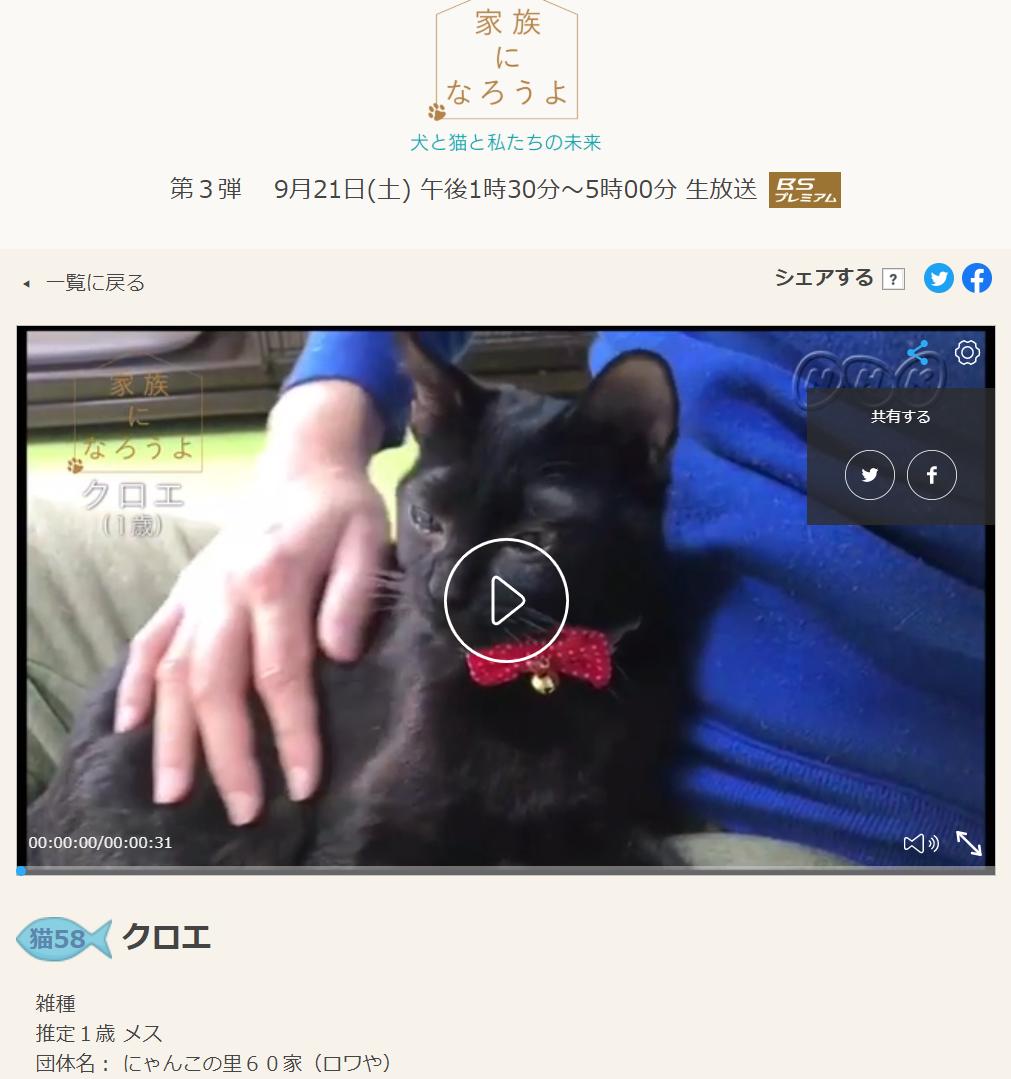 NHKテレビ番組の家族になろうよで放送された保護猫クロエ