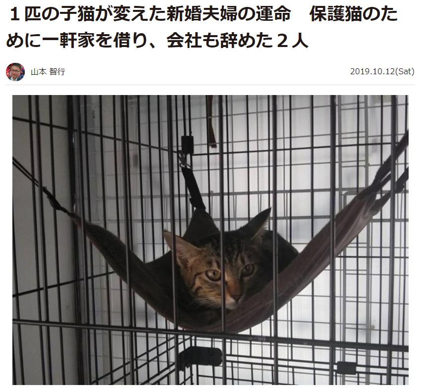 2019年10月12日にYahoo!ニュースで掲載された保護猫の記事