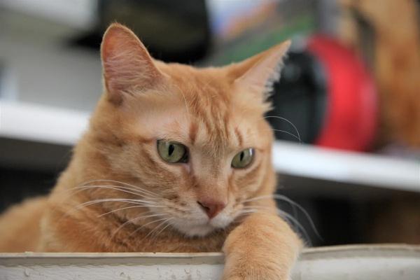 ELEMINISTで掲載された保護猫の記事