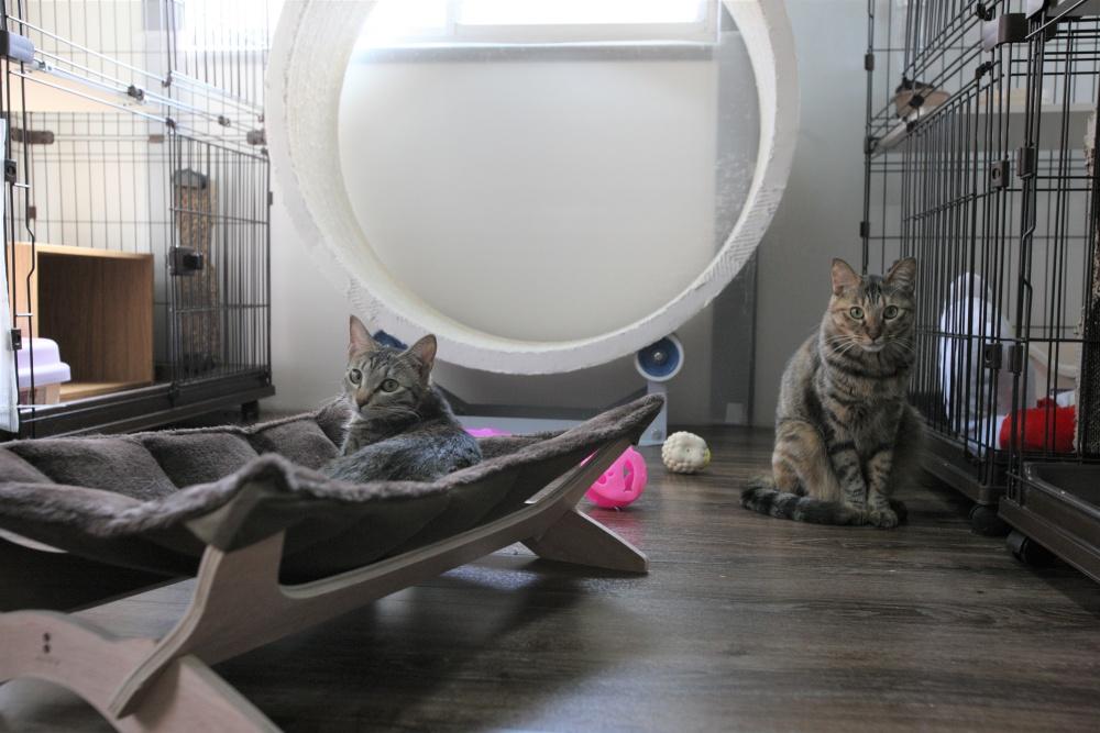 60家の保護猫シェルター